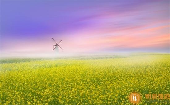 梦见自己在飞是什么征兆,自己飞上飞下什么意思